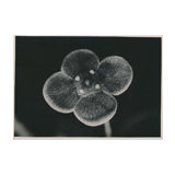 362. Online auction - Photography