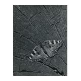 371. Rücklosliste der Fernauktion - Fotografie