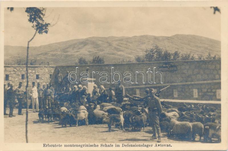 Erbeutete montenegrinische Schafe im Defensionslager Avtovac / K.u.K. military, sheep caught in camp Avtovac, Zsákmányul ejtett juhok az avtovaci katonai táborban