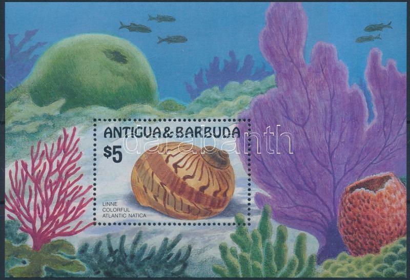 Sea snails block, Tengeri csigák blokk