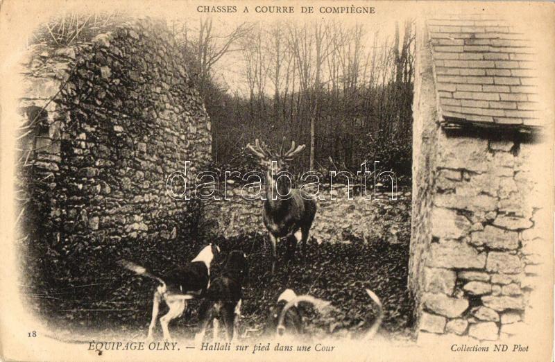 Equipage Olry, Hallali sur pied dans une Cour / hunting dogs, deer, Vadászkutyák sarokba szorított szarvassal