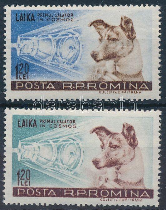 Dog Laika, Lajka kutya