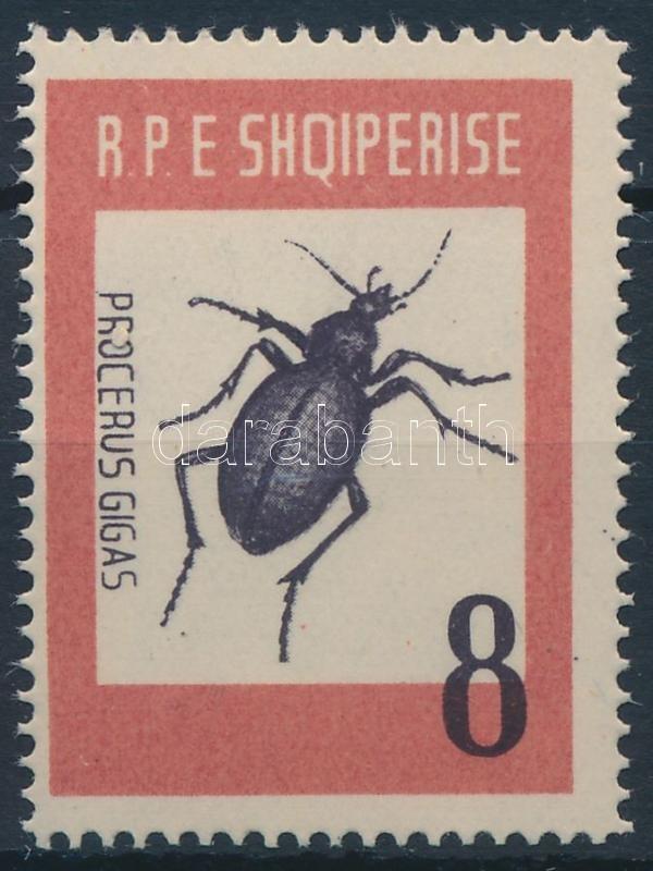 Beetle, Bogár