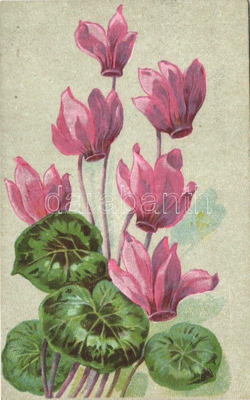 Flowers, litho, Ciklámen virág, litho
