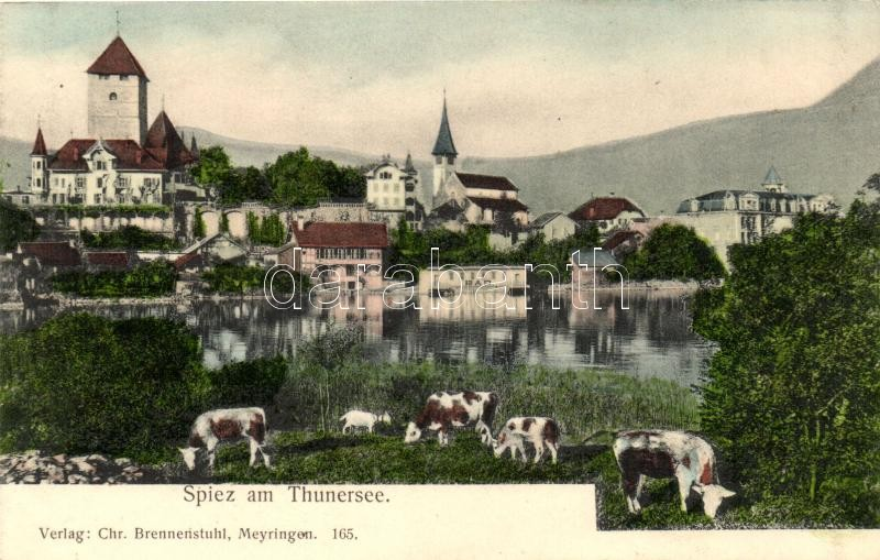 Spiez am Thunersee / general view with cows