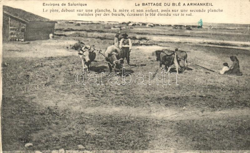 Thessaloniki, Le Battage de Blé a Armankeil / wheat threshing, folklore (probably from postcard booklet)
