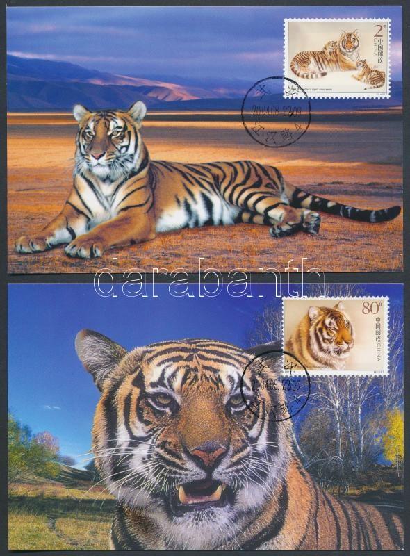 South China tiger set 2 CM, Dél-kínai tigris sor 2 db CM-n