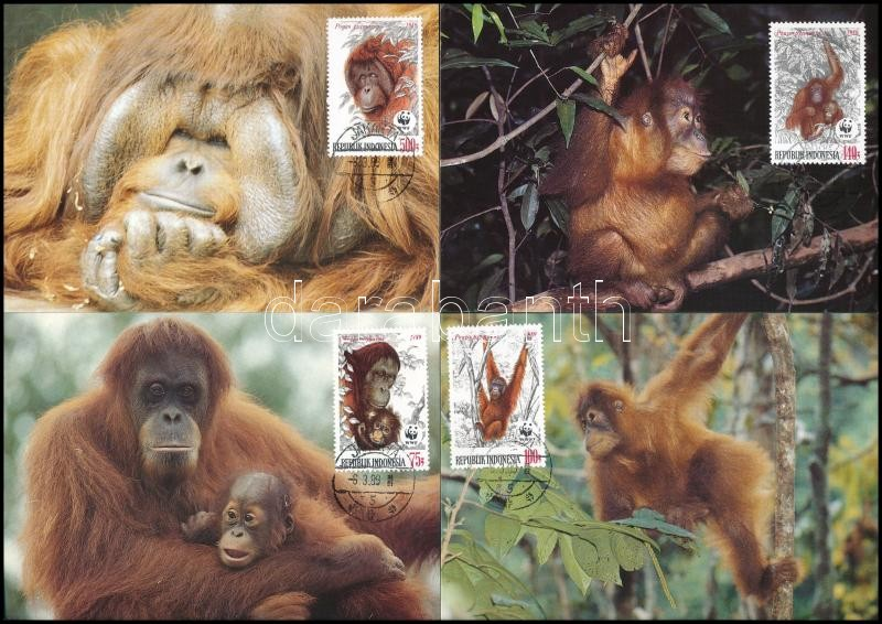 WWF Orangutan set 4 CM, WWF: Orangután sor 4 db CM-en