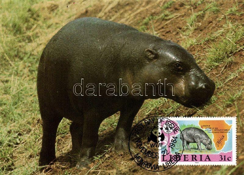 WWF pygmy hippo set 4 CM, WWF Törpevíziló sor 4 CM, WWF Zwergflußpferd Satz 4 CM