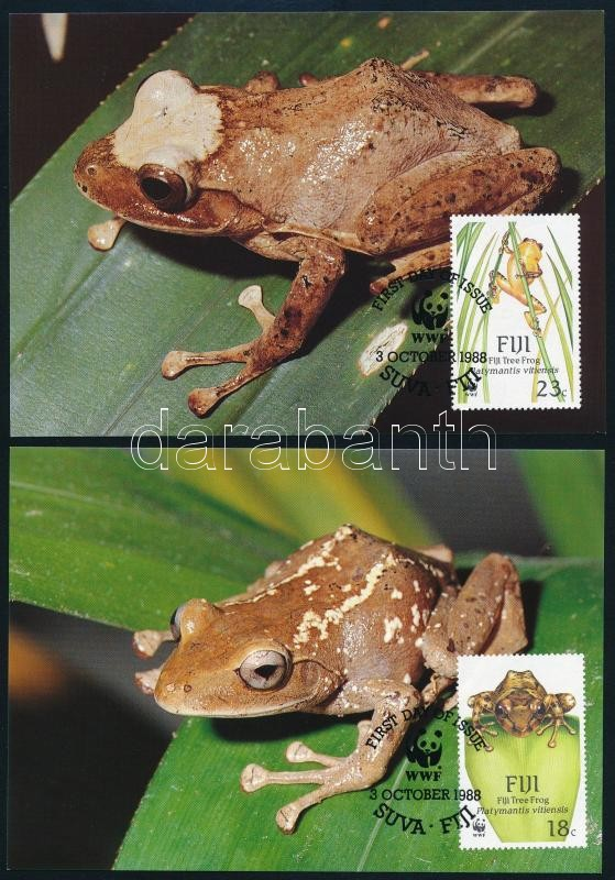 WWF Frogs set on 4 CM, WWF Békák sor 4 db CM-en