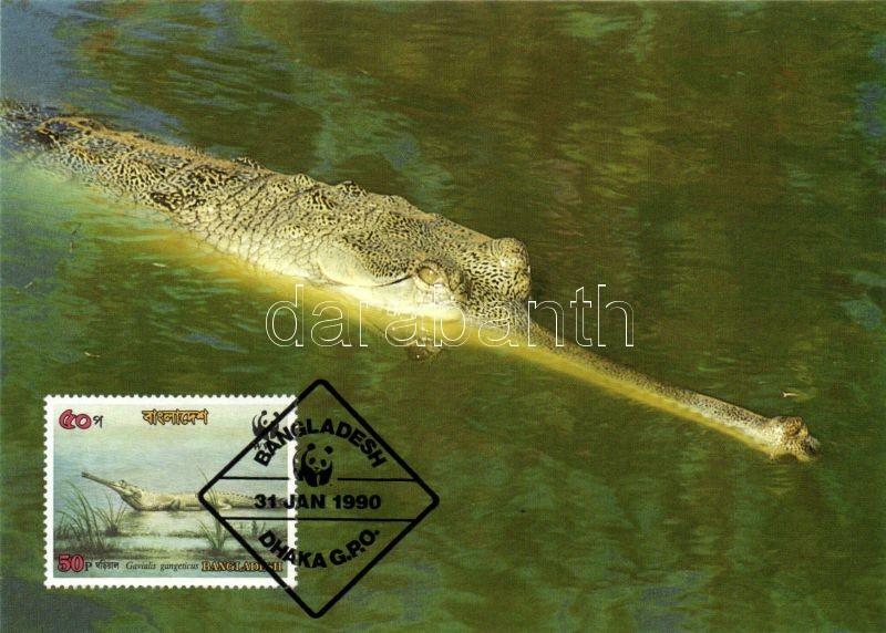 Crocodile of Ganges CM, Gangeszi krokodil CM, Gangesgavial CM