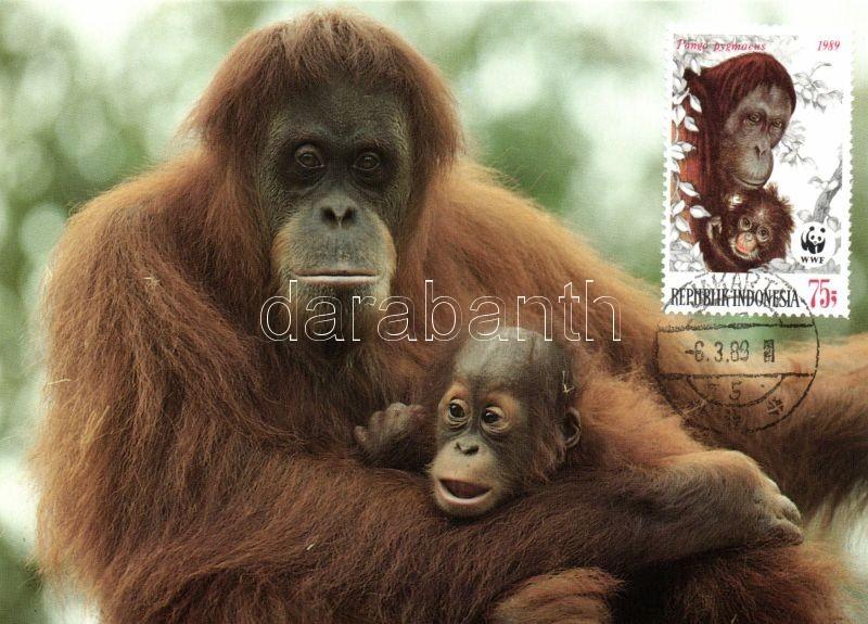 WWF Orángután sor 4 CM, WWF Orangutan set 4 CM, WWF Orang-Utan Satz 4 CM
