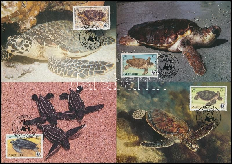 WWF: Turtles set on 4 CM, WWF: Teknősök sor 4 db CM-en
