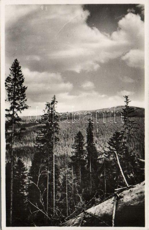 Jasina, Yasinia; Kukul / mountain, Körösmező, Kukul hegy