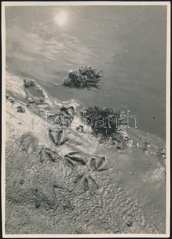 cca 1936 Kinszki Imre (1901-1945) budapesti fotóművész aláírással és pecséttel jelzett vintage fotóművészeti alkotása (Wo die Ente ans Land kam...), 18x12,6 cm