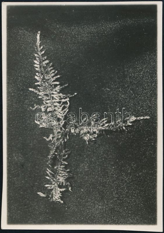 1929. május, Kinszki Imre (1901-1945) budapesti fotóművész hagyatékából, jelzés nélküli vintage fotó, a szerző által datálva és sorszámozva (ez a 159. sz. felvétele), 8,3x5,7 cm
