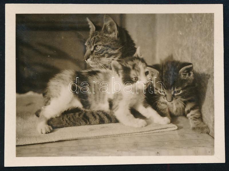 cca 1932 Kinszki Imre (1901-1945) budapesti fotóművész hagyatékából, jelzés nélküli vintage fotó (cicacsalád), 4,5x6 cm
