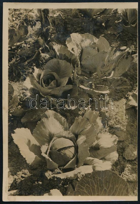 1931 Kinszki Imre (1901-1945) budapesti fotóművész hagyatékából, a szerző által feliratozott  vintage fotó (Csillaghegy), 8,6x6 cm