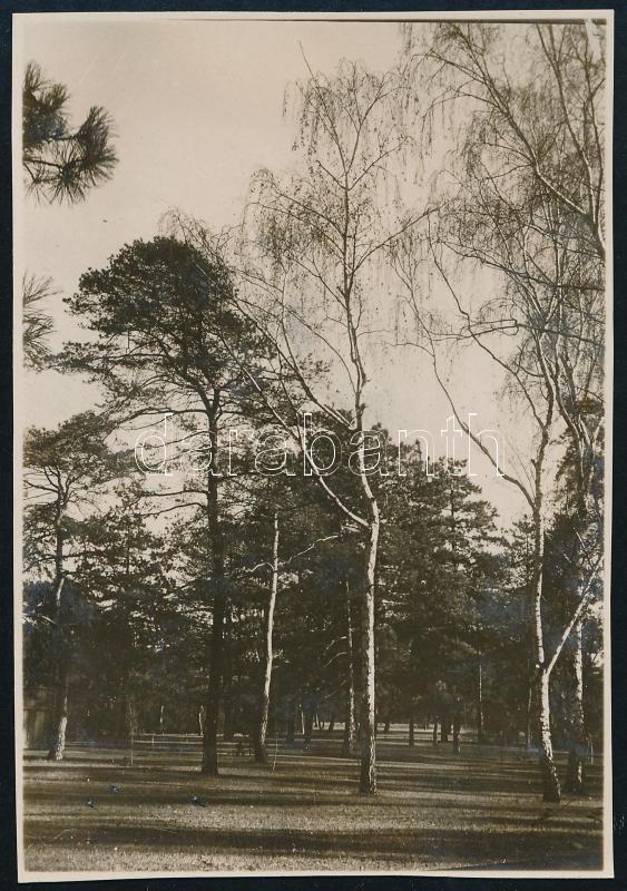 cca 1928 Kinszki Imre (1901-1945) budapesti fotóművész hagyatékából, a szerző által feliratozott  vintage fotó (Budapest, Városliget, ez szerző 47. sz. felvétele), 8,5x6 cm
