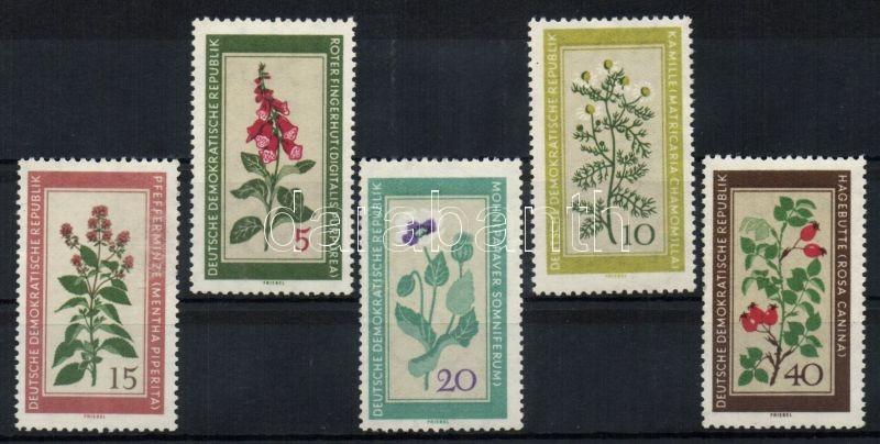 Native herbal plants set, Őshonos gyógynövények sor, Einheimische Heilpflanzen Satz