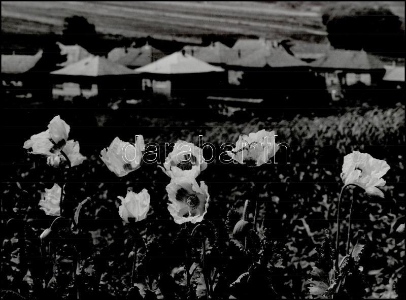 1980 Gebhardt György (1910-1993) budapesti fotóművész hagyatékából, a szerző által feliratozott, vintage fotóművészeti alkotás (Falu mákvirágokkal), 29,5x39,5 cm