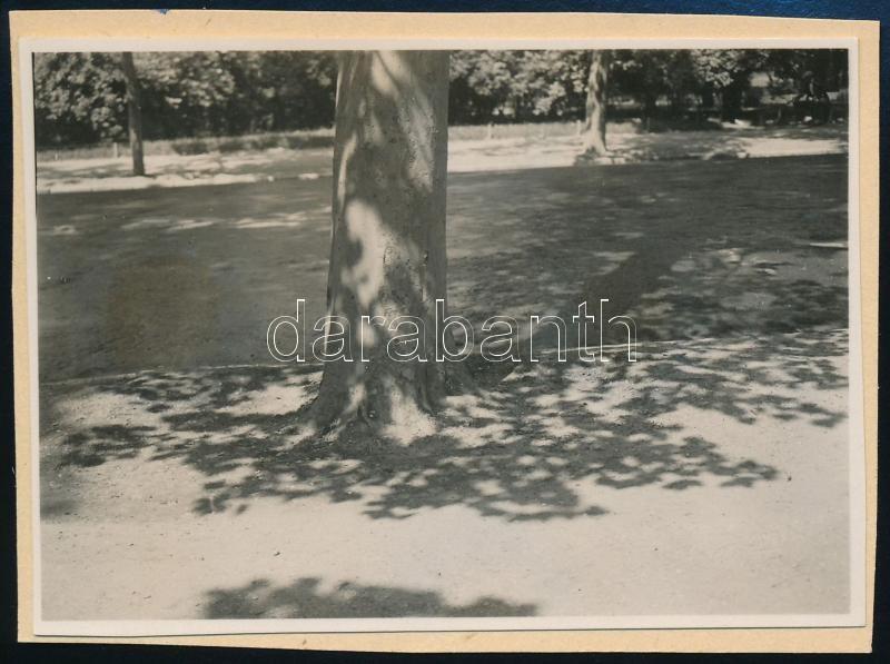 1931 Kinszki Imre (1901-1945) budapesti fotóművész hagyatékából, a szerző által feliratozott vintage fotó (Városliget, ez a szerző 892. számú felvétele), 6x8,5 cm