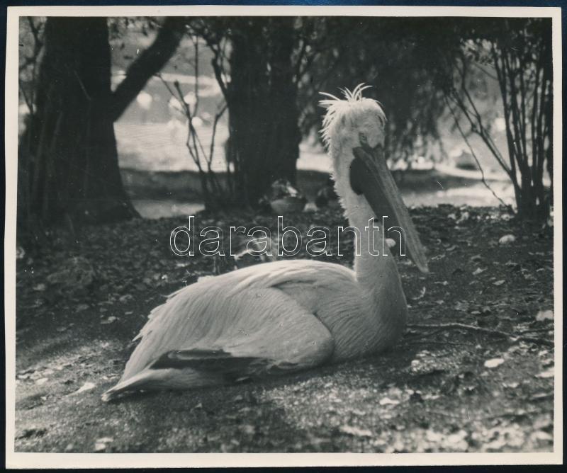 cca 1933 Kinszki Imre (1901-1945) budapesti fotóművész hagyatékából, pecséttel jelzett vintage fotó (Pihenő), 11,6x14 cm
