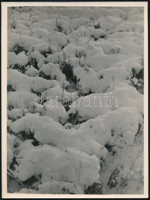 cca 1934 Kinszki Imre (1901-1945) budapesti fotóművész pecséttel jelzett vintage fotóművészeti alkotása (Havas növényzet), 24x18 cm