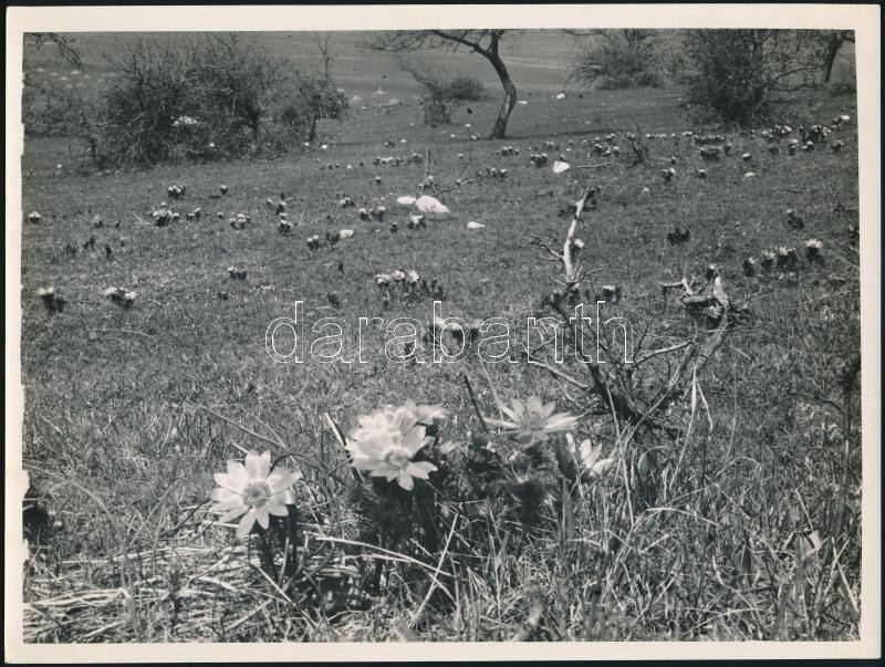 cca 1935 Kinszki Imre (1901-1945) budapesti fotóművész  hagyatékából, feliratozott vintage fotóművészeti alkotás (Mezei virágok), 18x24 cm