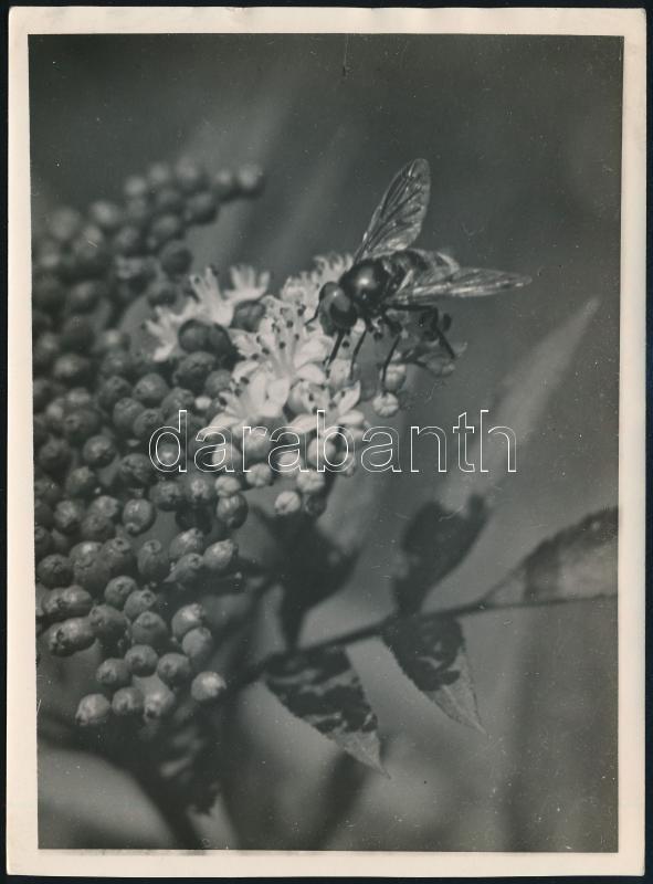 cca 1936 Kinszki Imre (1901-1945) budapesti fotóművész pecséttel jelzett és a szerző által feliratozott, vintage fotóművészeti alkotása (N. Verőce, Valucella), 17,7x13 cm