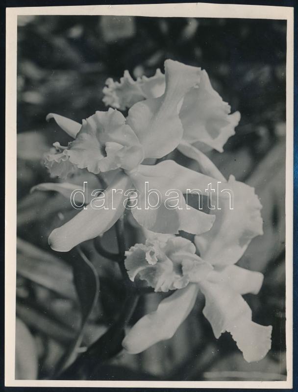 cca 1932 Kinszki Imre (1901-1945) budapesti fotóművész pecséttel jelzett vintage fotóművészeti alkotása (Virág), 17,2x13 cm