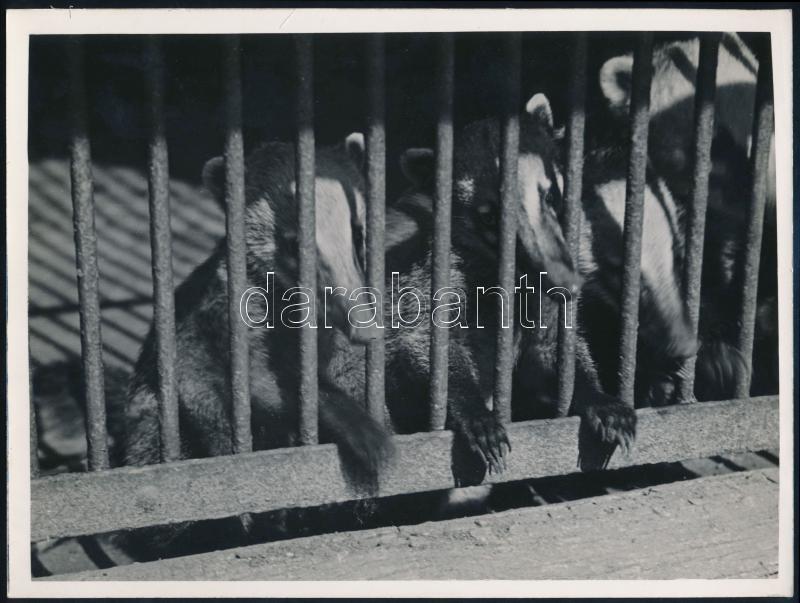 cca 1933 Kinszki Imre (1901-1945) budapesti fotóművész pecséttel jelzett vintage fotóművészeti alkotása (Kíváncsiság), 18x24 cm