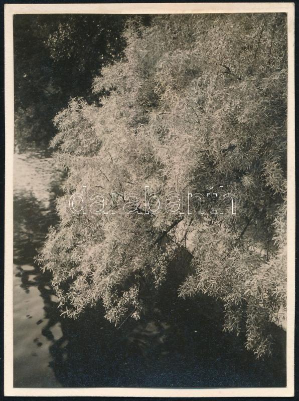 1931 Kinszki Imre (1901-1945) budapesti fotóművész által datált és sorszámozott (905) vintage fotó, 8,5x6,4 cm