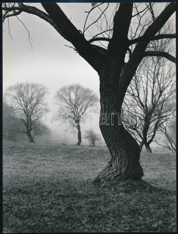 cca 1978 Gebhardt György (1910-1993) budapesti fotóművész hagyatékából 2 db vintage fénykép, az egyik aláírt (Táj), a másik jelzés nélküli (Bogáncs), 23,5x17,5 cm