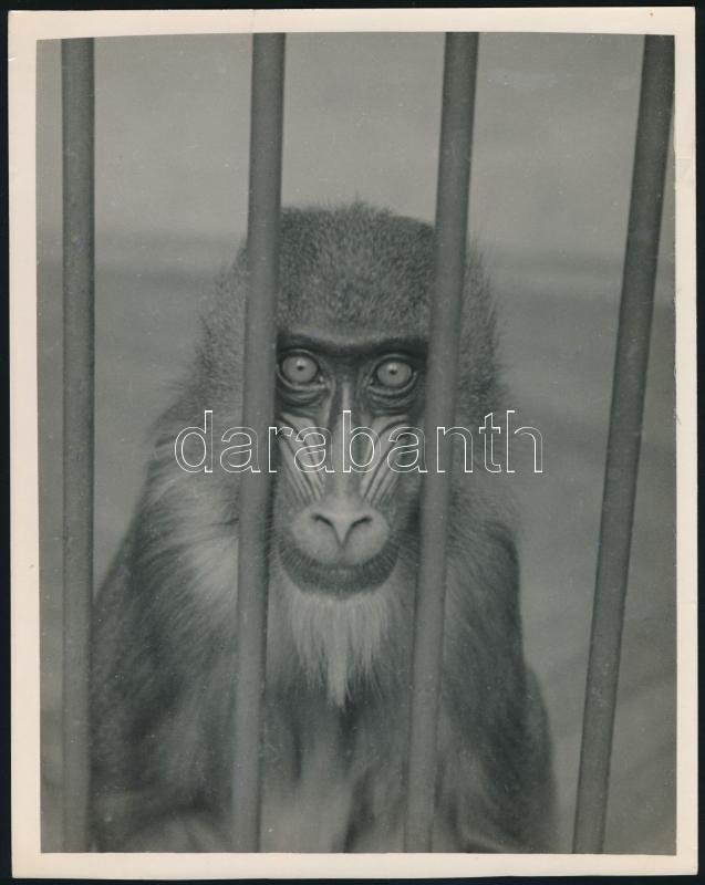 cca 1933 Kinszki Imre (1901-1945) budapesti fotóművész hagyatékából jelzés nélküli, vintage fotóművészeti alkotás (Szomorú szemek), 22,5x18 cm