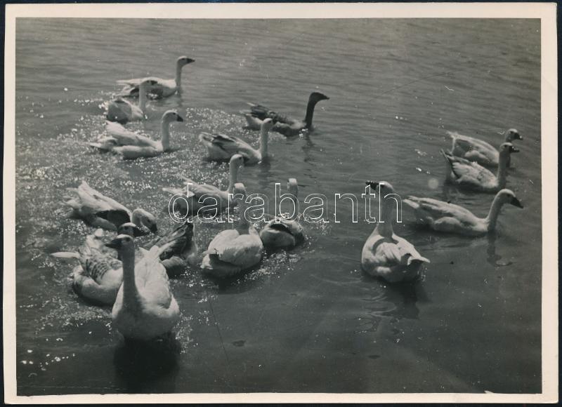 cca 1935 Kinszki Imre (1901-1945) budapesti fotóművész pecséttel jelzett vintage fotóművészeti alkotása (Fürdőzés), 13x17,8 cm