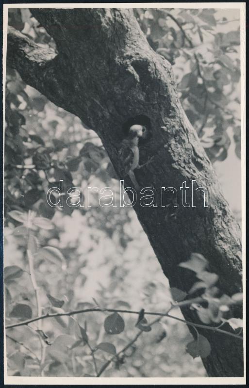 cca 1933 Kinszki Imre (1901-1945) budapesti fotóművész pecséttel jelzett vintage fotóművészeti alkotása (Élelem szállítás), 17,3x11 cm