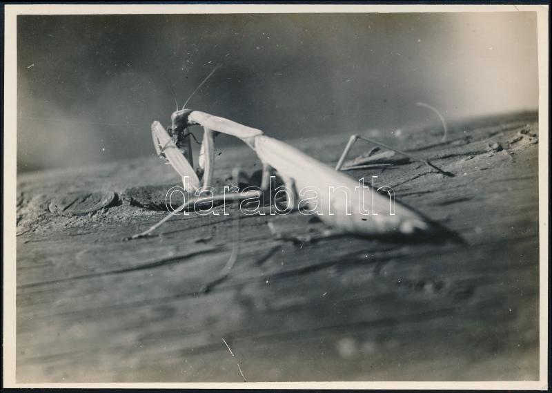 cca 1936 Kinszki Imre (1901-1945) budapesti fotóművész pecséttel jelzett vintage fotóművészeti alkotása (Lakoma), 12,5x17,7 cm