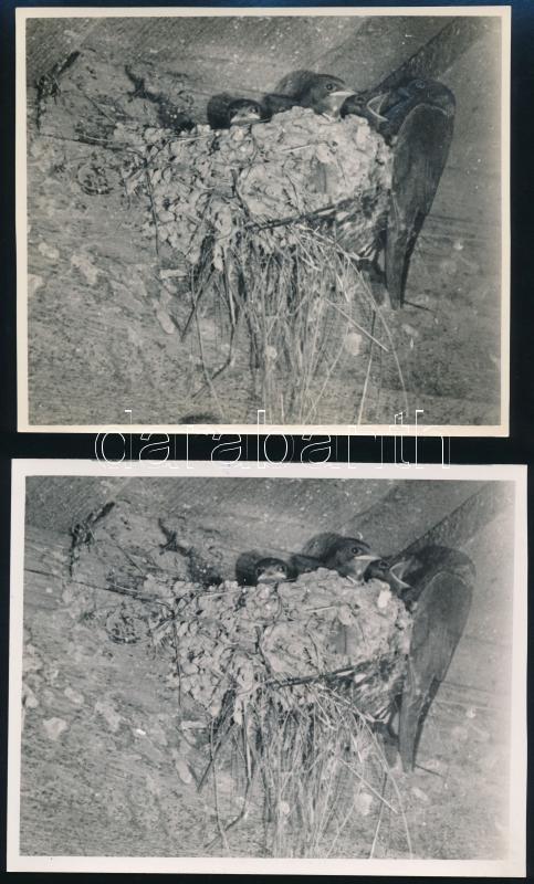 cca 1936 Verőce, Kinszki Imre (1901-1945) budapesti fotóművész hagyatékából, 4 db pecséttel jelzett, vintage fotó, az egyik feliratozva is (Füsti fecskék fészke Verőcén), 12,5×14,5 cm