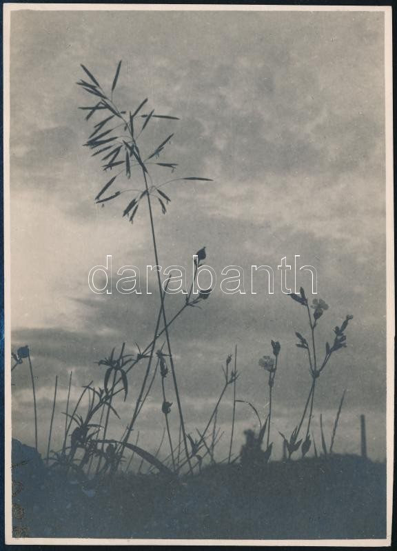 cca 1936 Kinszki Imre (1901-1945) budapesti fotóművész pecséttel jelzett, vintage fotóművészeti alkotása (Mezei égigérő), 17,5x12,5 cm