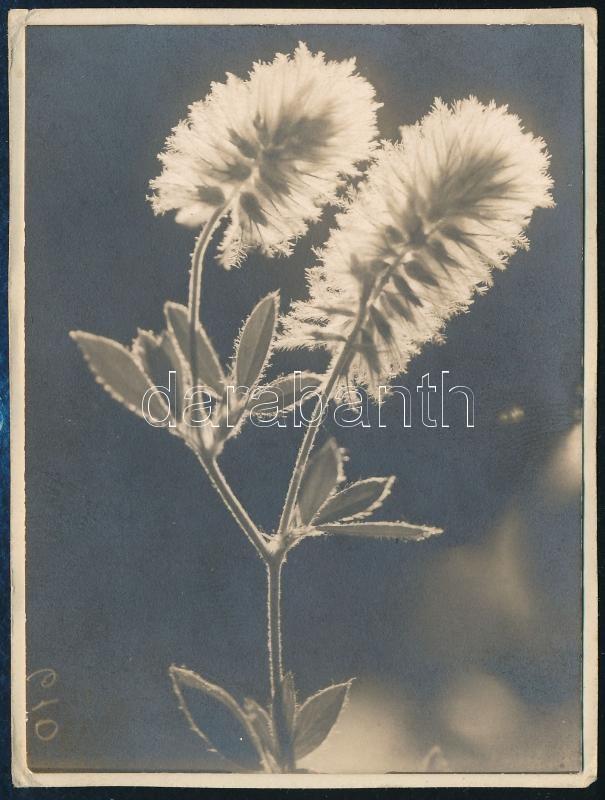 1929 Kinszki Imre (1901-1945) budapesti fotóművész jelzés nélküli, de általa feliratozott és datált vintage fotója a hagyatékából (Ellenfényben), 8,5x6,3 cm