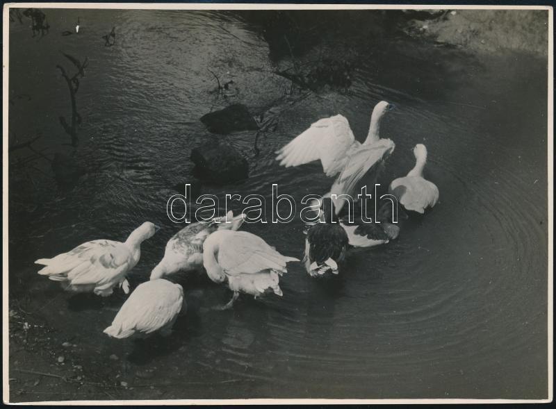 cca 1936 Kinszki Imre (1901-1945) budapesti fotóművész hagyatékából, a szerző által feliratozott, pecséttel jelzett és aláírt vintage fotó (Pancsi), 12,5x17,1 cm