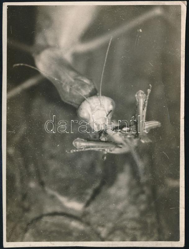 cca 1933 Kinszki Imre (1901-1945) budapesti fotóművész hagyatékából, a szerző által feliratozott vintage fotó (Reggeli), 10,8x8 cm