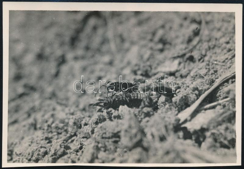 cca 1933 Kinszki Imre (1901-1945) budapesti fotóművész hagyatékából, a szerző által feliratozott, vintage fotó (Bodobács), 9x12,8 cm
