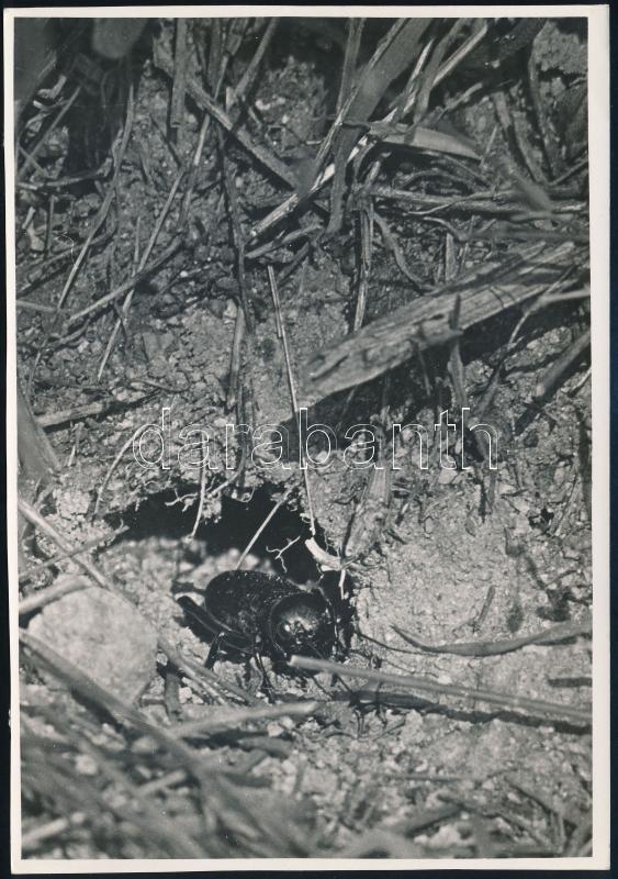 cca 1934 Kinszki Imre (1901-1945) budapesti fotóművész hagyatékából, a szerző által írógéppel feliratozott, vintage fotó (cím nélkül), 16,8x11,8 cm