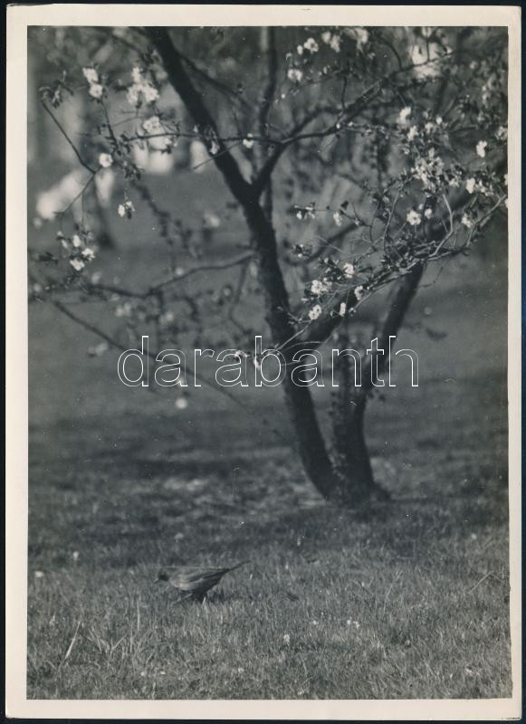 cca 1932 Kinszki Imre (1901-1945) budapesti fotóművész hagyatékából, pecséttel jelzett vintage fotó (kismadár a fa alatt), 18x13 cm
