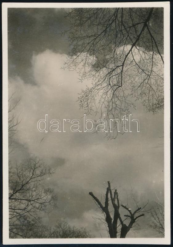 cca 1932 Kinszki Imre (1901-1945) budapesti fotóművész hagyatékából jelzés nélküli vintage fotó (Az égbolt egy erdei tisztásról), 8,5x6 cm