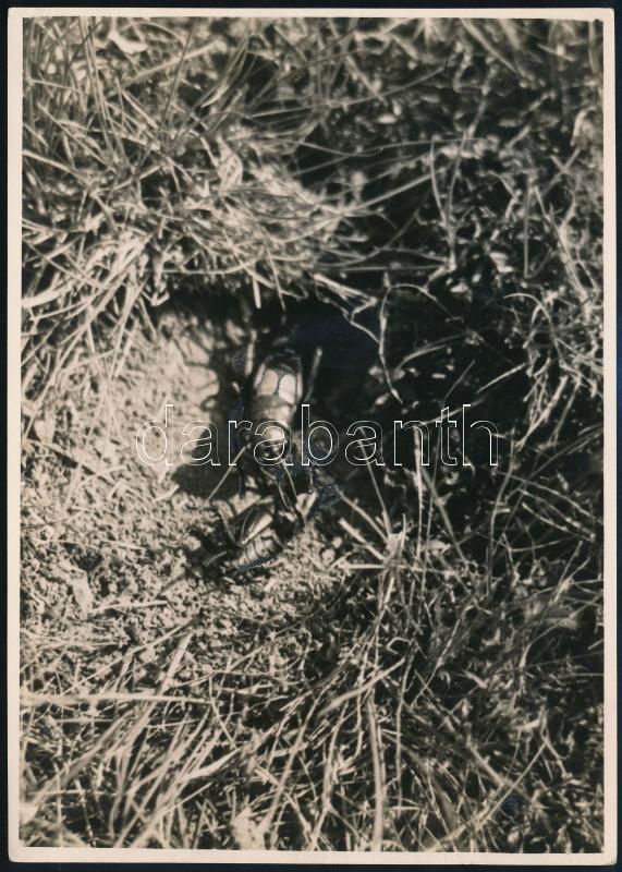 cca 1934 Kinszki Imre (1901-1945) budapesti fotóművész hagyatékából pecséttel jelzett és a szerző által németül feliratozott vintage fotó, 17,6x12,5 cm