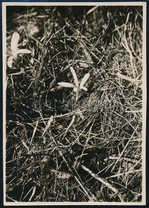1928 Kinszki Imre (1901-1945) budapesti fotóművész hagyatékából, a szerző által feliratozott vintage fotó (Bp., Mártonhegy, ez a szerző 28. sz. felvétele), 8,5x6,0 cm