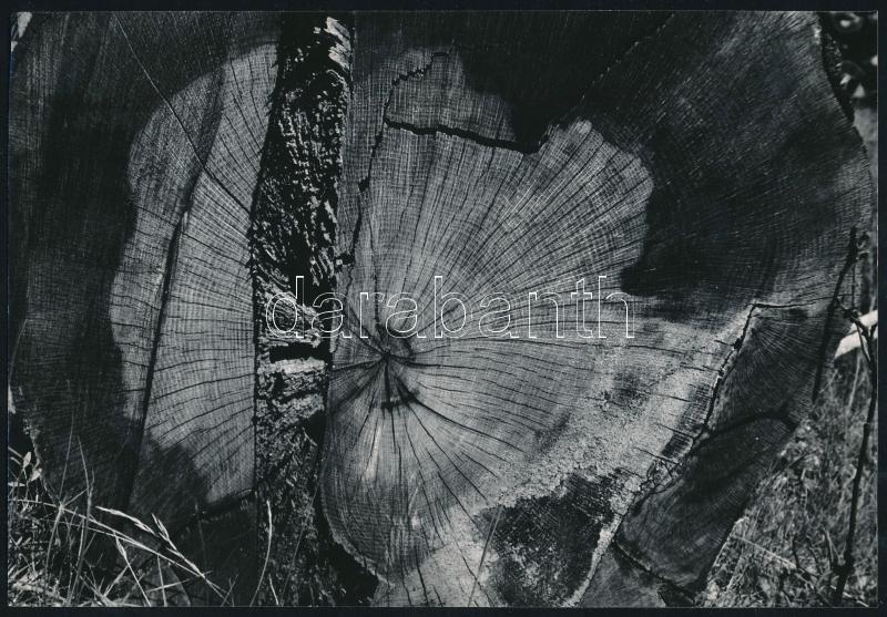 cca 1975 Gebhardt György (1910-1993) budapesti fotóművész hagyatékából jelzés nélküli vintage fotóművészeti alkotás, a magyar fotográfia avantgarde korszakából (évgyűrűk és repedések), 16x23,2 cm